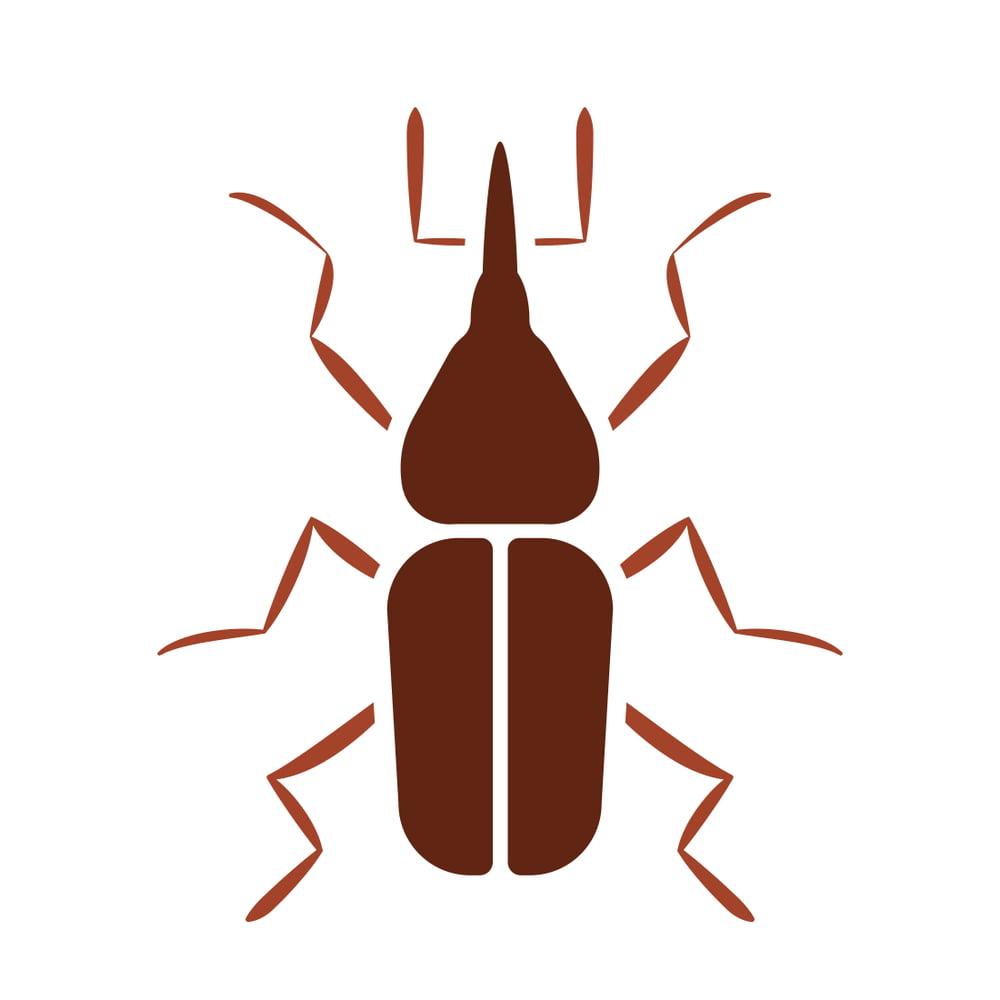 billbug drawing