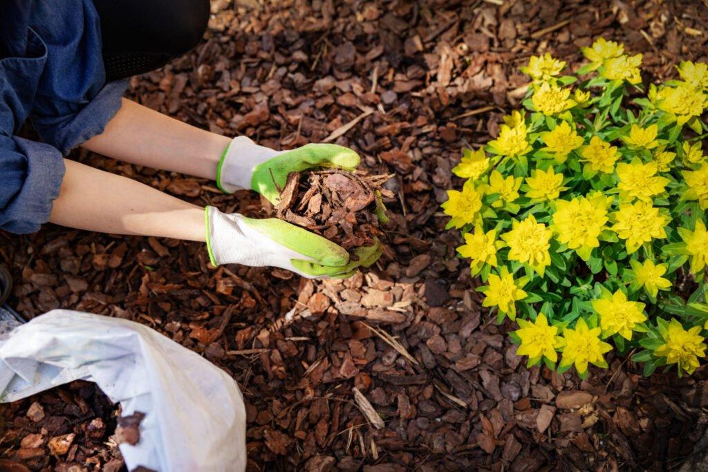 lady spreading mulch