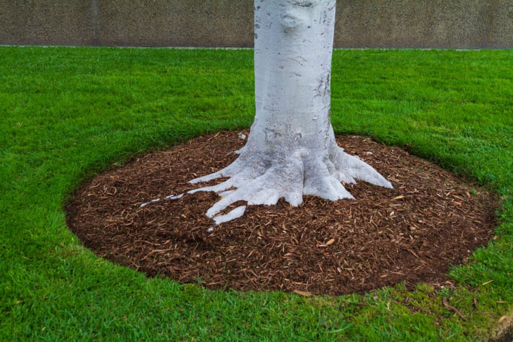 nicely mulched tree