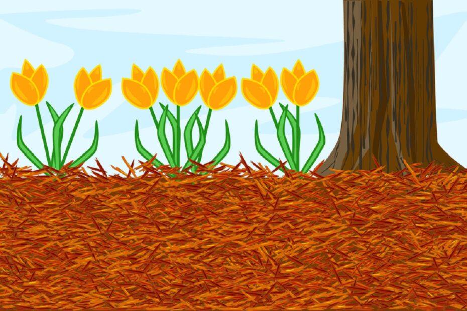 mulch around flowers and tree