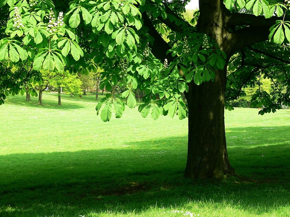 big shade spot