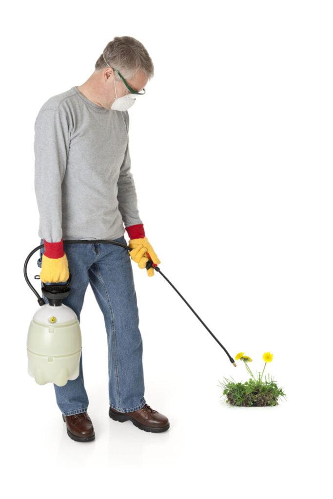 man spraying weeds